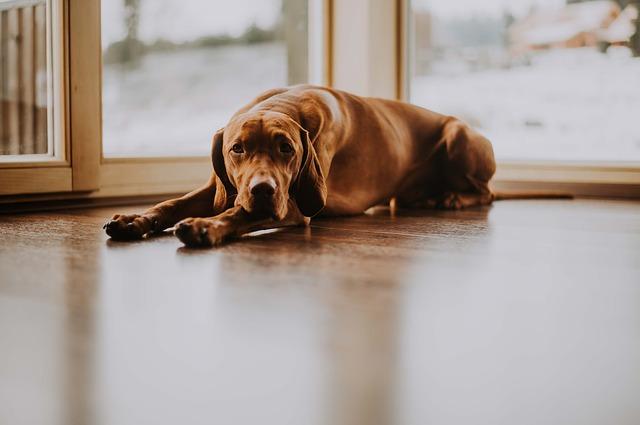 pes na podlaze