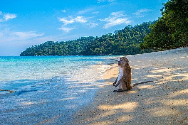 opice na pláži